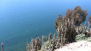 ボリビア/チチカカ湖/太陽の島
