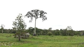ブラジル/マナウス