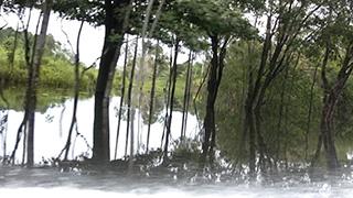 ブラジル/マナウス/アマゾン川
