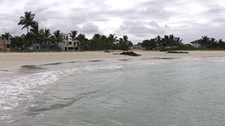 エクアドル/ガラパゴス諸島/イサベラ島