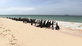 エクアドル/ガラパゴス諸島/ノース・セイモア島