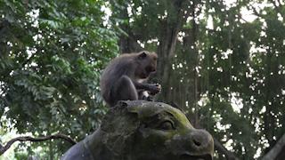 インドネシア/バリ島/モンキー・フォレスト/カニクイザル