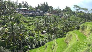 インドネシア/バリ島/テガララン/ライステラス