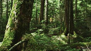 日本/北八ヶ岳/苔の森