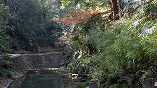 日本/東京/等々力渓谷