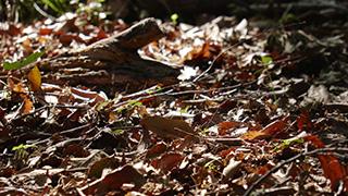 山林の落ち葉