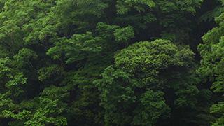森に降る雨