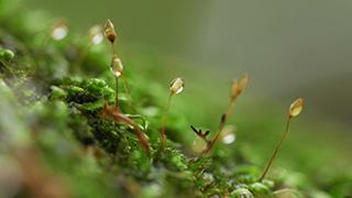 木に生える水滴の付いたコケ