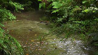 森を流れる小川