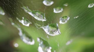 クモの巣に付く水滴