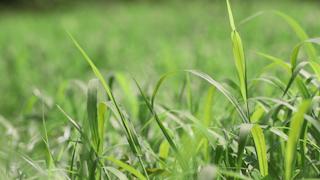 風に揺れる草