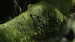 木に生えるコケ