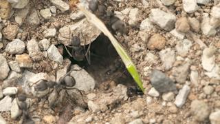 アリの巣/タイムラプス