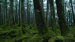 コケに覆われた森
