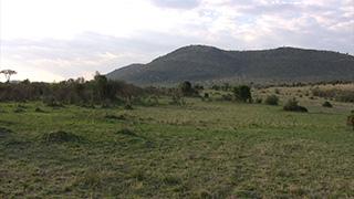 ケニア/マサイマラ国立保護区