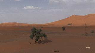 モロッコ/サハラ砂漠