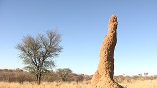 ナミビア/ナミブ砂漠/アリ塚