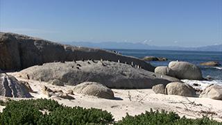 南アフリカ/ケープタウン/ボルダーズビーチ/ケープペンギン